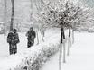 Воронеж заметает снегом  136799