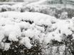 Воронеж заметает снегом  136811