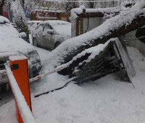 355 сообщений о поваленных снегопадом деревьях поступило воронежским спасателям