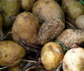 Воронежские школьники могли отравиться гнилыми и просроченными продуктами