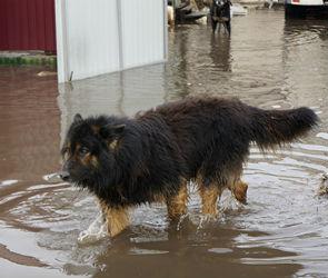В Воронеже построят еще один приют для бездомных животных