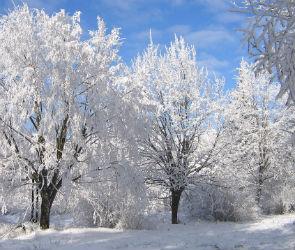 На Рождество в Воронеже потеплеет и выпадет снег