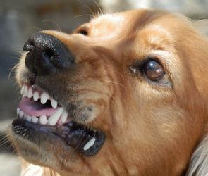В Северном микрорайоне Воронежа стая собак искусала 8-летнюю девочку