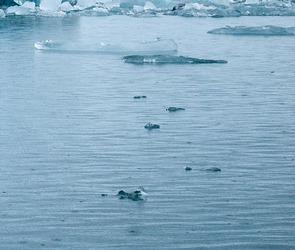 Спасатели просят воронежцев воздержаться от выхода на лед