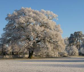 Морозы в Воронеже продержатся еще несколько дней