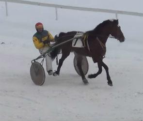 Воронежский жеребец занял первое место на зимних бегах в Москве (ВИДЕО)