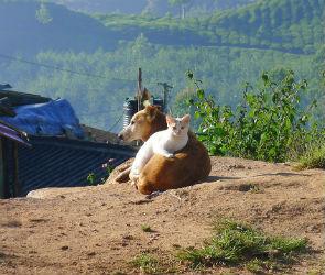 Александр Гусев: «Строить приют для животных будем на деньги городского бюджета»