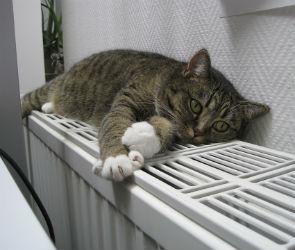 В Воронеже 83 дома, 3 детских сада, 2 поликлиники и лицей остались без тепла