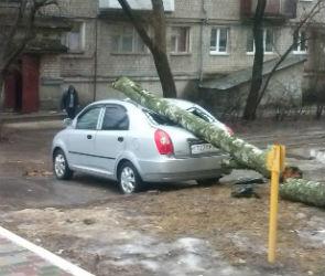 В центре Воронежа дерево рухнуло на крышу иномарки (ФОТО)