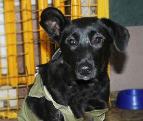Собаку, которую подменили в воронежской ветклинике, ищут в Новой Усмани