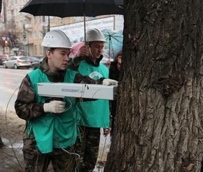 Воронежские ученые и экологи приступили к поискам гнилых деревьев (ФОТО)
