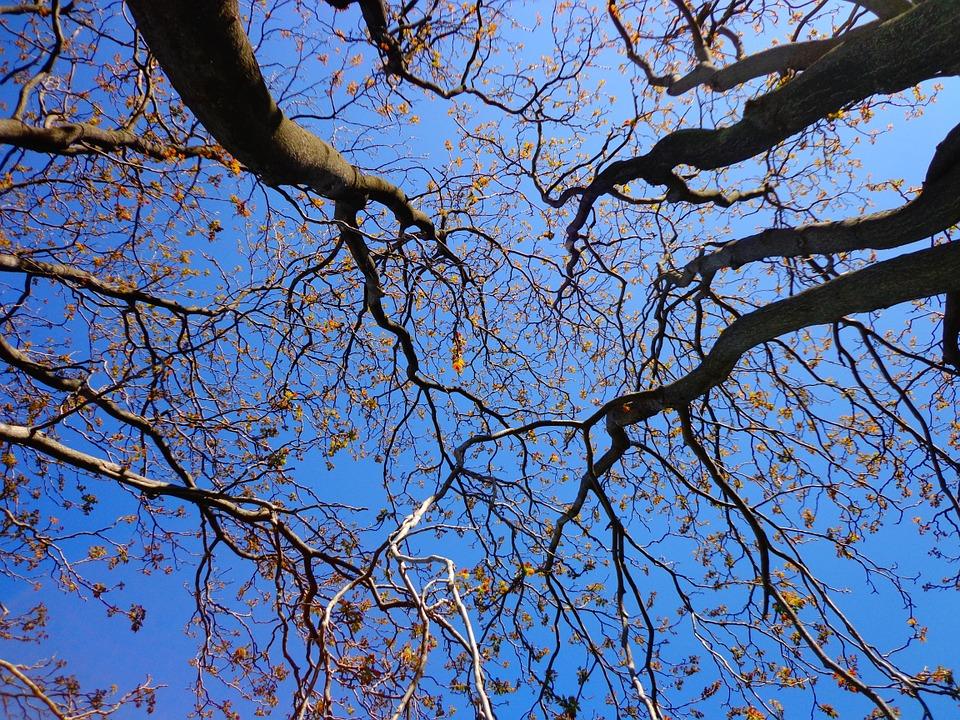 Последние зимние выходные в Воронеже обещают быть теплыми