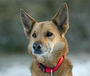 В Воронеже полиция с собаками искала пропавшего 7-летнего мальчика