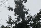 В Воронеже 8 Марта женщина залезла на верхушку елки