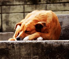 В Воронеже приют для бездомных животных обустроят на Холмистой около ГИБДД
