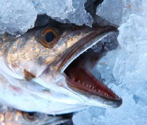 В Воронеж пытались ввезти опасную рыбу, свинину и курицу