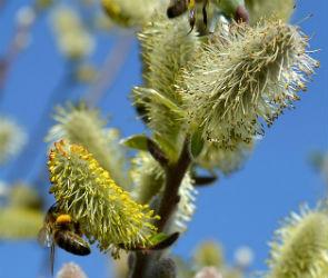 Как пережить сезон аллергии: советы специалиста