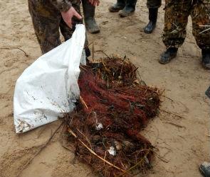 Почти 400 килограммов браконьерских сетей извлекли из воронежского водохранилища