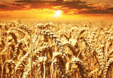 Воронежский регион по производству сельхозпродукции занял в стране пятое место