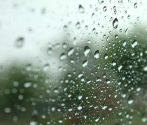 Праздничные выходные в Воронеже будут прохладными и дождливыми