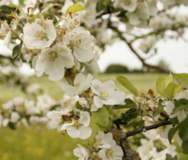 СУСК: Участок яблоневого сада под застройку был похищен у Российской Федерации