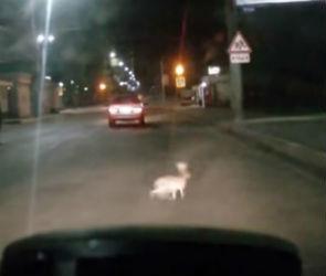 В Воронеже заяц прыгнул на проезжающую машину: видео появилось в сети
