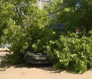 В центре Воронежа на машину упало дерево