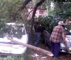 В Воронеже дерево придавило три машины
