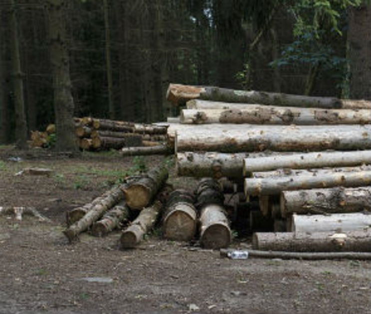 На главу пгт Анна завели уголовное дело за вырубку 380 деревьев в дендропарке
