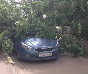 В Воронеже во время бури упали 30 деревьев и рекламный щит, пострадали 2 машины