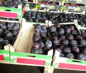 Почти полтонны санкционных яблок и слив уничтожили на полигоне под Воронежем