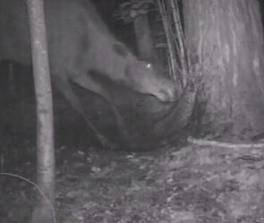 Тайная жизнь животных из Воронежского заповедника попала на видео