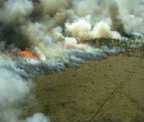 В Воронежской области объявлен максимально высокий класс пожарной опасности