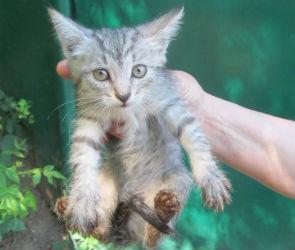 В Воронеже спасли котенка, застрявшего в колодце