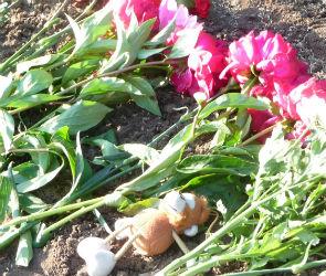 В Воронеже вандалы осквернили место, где нашли Катю Череповецкую