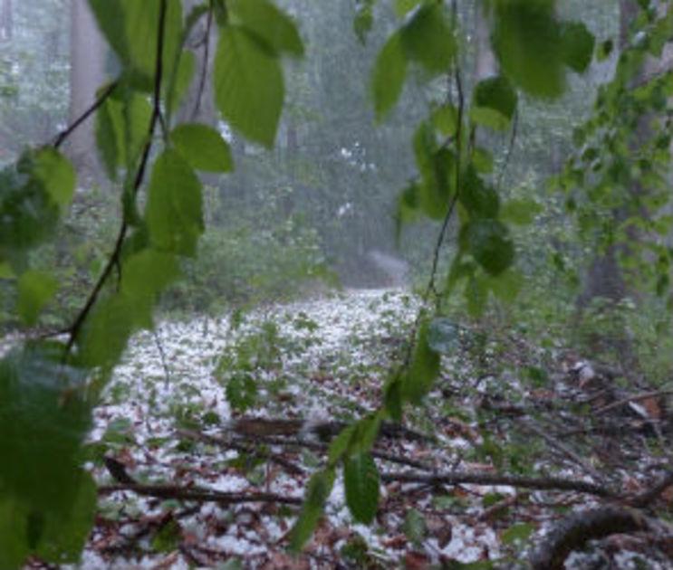 МЧС предупредило о ливнях, граде и сильном ветре в Воронежской области