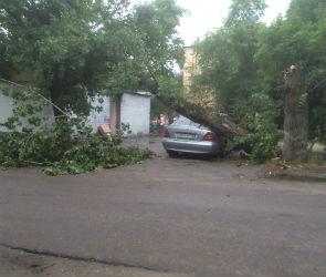 Во время бури в Воронеже упали 7 деревьев, пострадали две машины