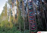 Воронежский гамак-парк попал в Книгу рекордов России