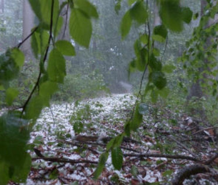 Спасатели предупредили о дожде, граде и грозах в Воронежской области