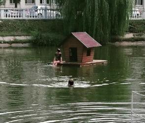 Воронежцы плавали вместо лебедей в озере на Минской