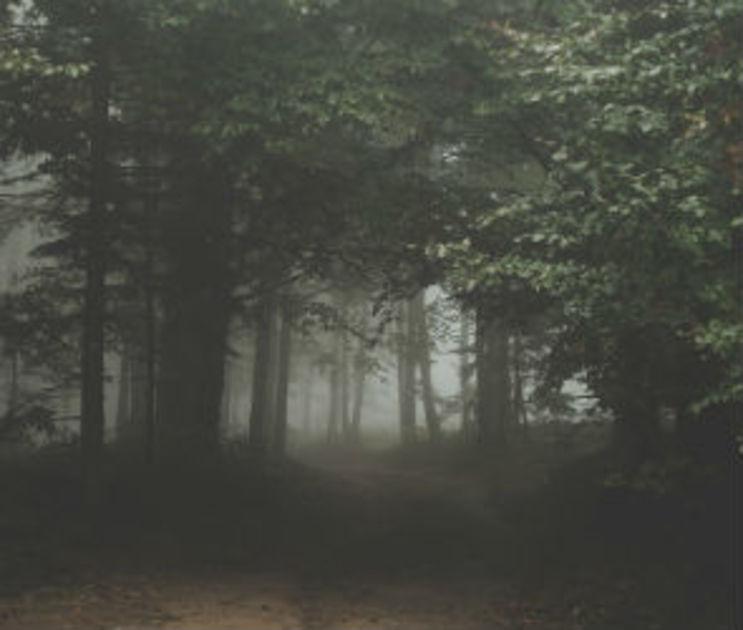 В Воронеже тела убитых мужчины и женщины несколько дней пролежали в лесу