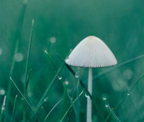 В Воронеже резко похолодает, пойдут дожди