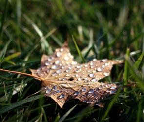 В Воронеже на неделе будет холодно и дождливо