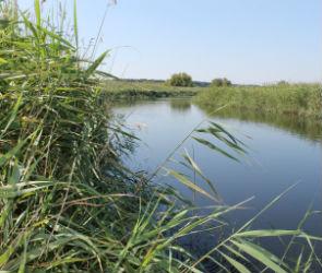 Реке в Воронежской области угрожает экологическая катастрофа