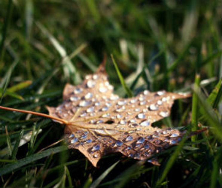 Синоптики обещают холодную и дождливую неделю в Воронеже