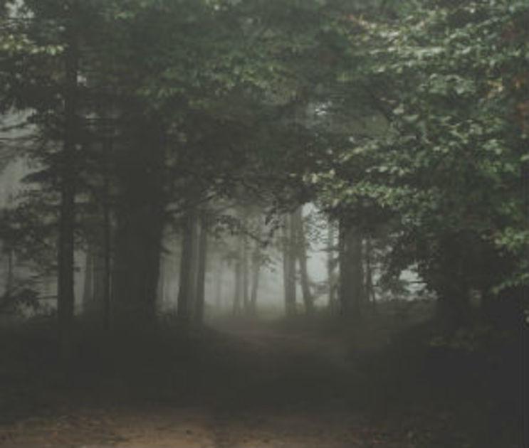 В Воронеже отец с маленькими детьми заблудился в лесу
