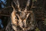 Снимок совы фотографа из Воронежа стал фаворитом конкурса National Geographic
