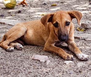 В Воронеже приют для бездомных собак построят в левобережной лесопарковой зоне