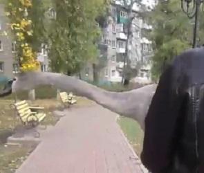 Воронежцы сняли на видео операцию по спасению лебедя, оказавшегося на дороге