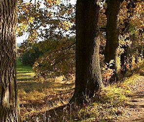 Браконьер с воронежского хутора спилил и украл сразу 48 дубов из лесничества